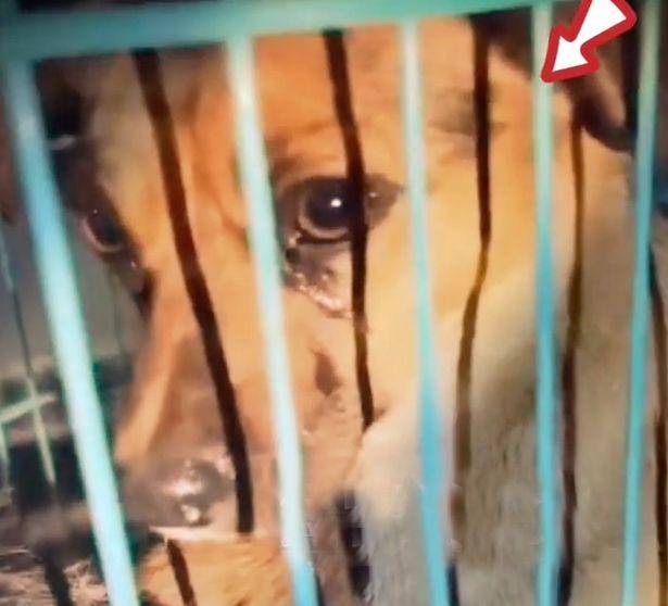 Chú chó mừng rơi nước mắt vì được giải cứu ngay khi sắp vào lò mổ - Ảnh 2.