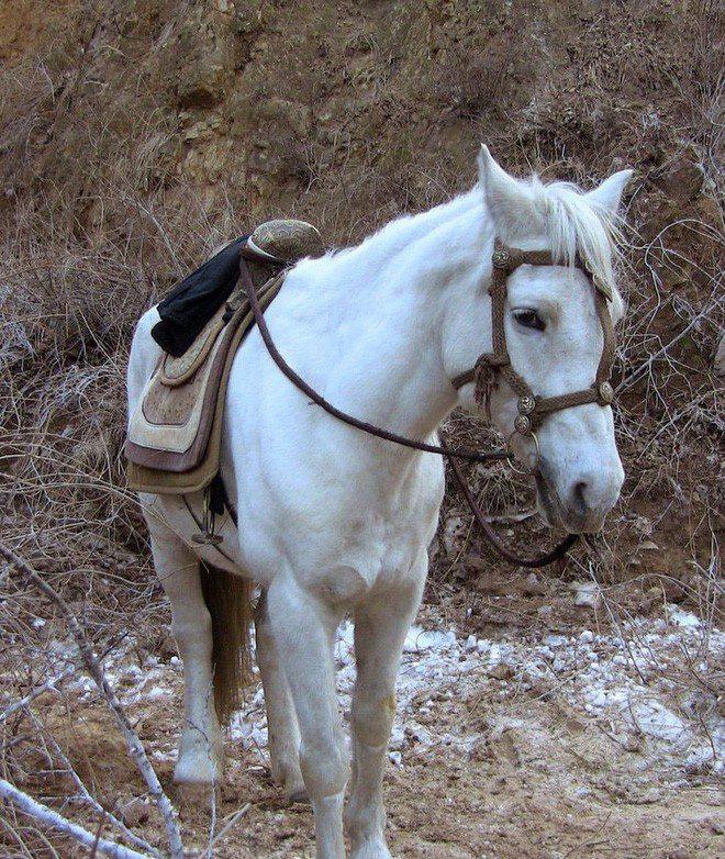 Vén màn lý do bé ngựa Tây Du Ký không bao giờ đánh yêu quái: Do có chống lưng khủng nên thích thế? - Ảnh 1.