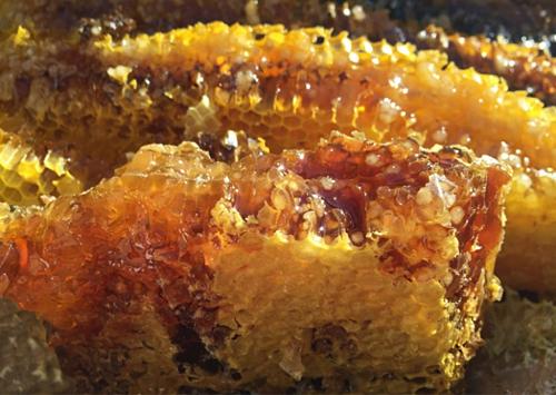 Giải mã thứ mật ong có thể khiến cả đoàn quân gặp ảo giác, choáng váng - Ảnh 1.