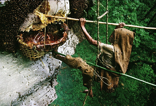 Giải mã thứ mật ong có thể khiến cả đoàn quân gặp ảo giác, choáng váng - Ảnh 3.