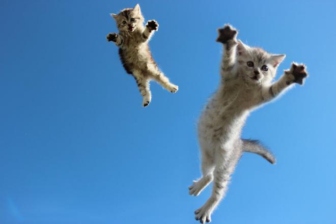 Tại sao mèo có thể ngã từ tầng 32 xuống đất mà vẫn sống sót? - Ảnh 3.