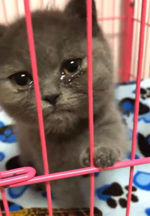 Đi làm về thấy mèo khóc thảm thiết, chủ nhân hốt hoảng rồi dở khóc dở cười khi phát hiện nguyên nhân phía sau - Ảnh 3.