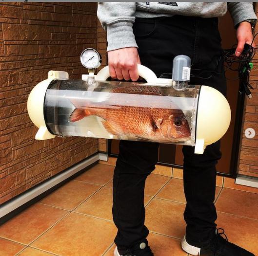 Túi trong suốt độc lạ dành riêng cho cá cảnh đi khắp muôn nơi - Ảnh 3.