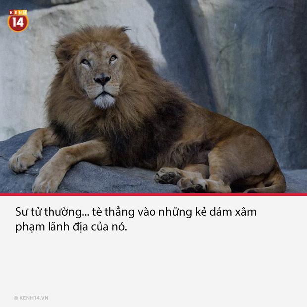 18 sự thật hắc ám đằng sau cánh cửa sở thú sẽ gột sạch sự hồn nhiên trong bạn - Ảnh 11.