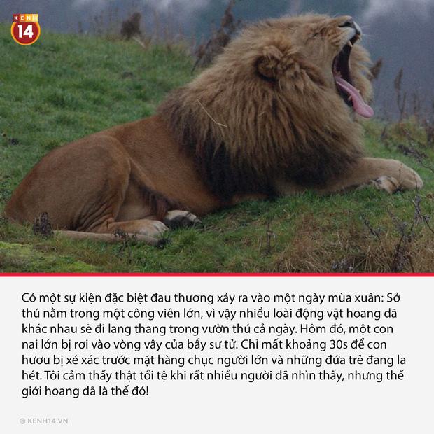 18 sự thật hắc ám đằng sau cánh cửa sở thú sẽ gột sạch sự hồn nhiên trong bạn - Ảnh 9.