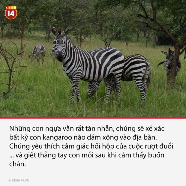 18 sự thật hắc ám đằng sau cánh cửa sở thú sẽ gột sạch sự hồn nhiên trong bạn - Ảnh 10.