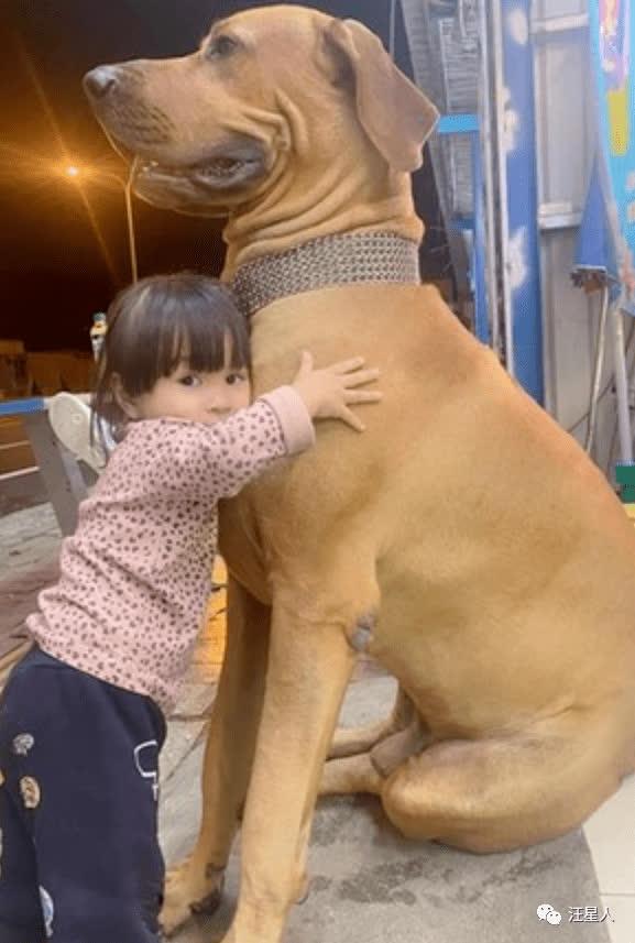 Bị bà chủ quên không cho ăn cơm, chú chó khổng lồ lập tức tìm ông chủ mách tội, bộ dạng nhìn đã thấy buồn cười - Ảnh 3.