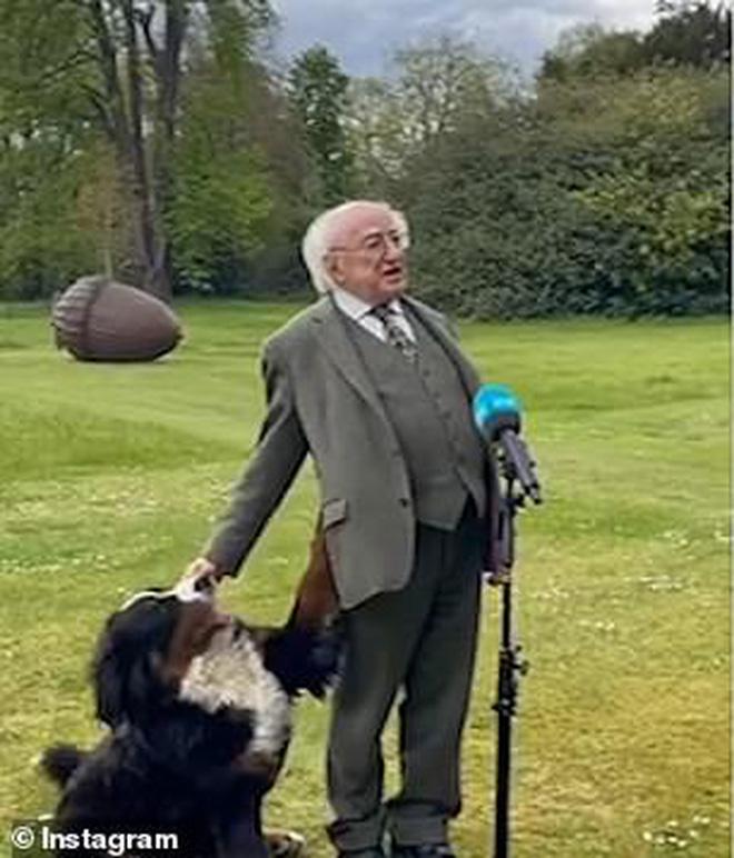 Chó cưng của Tổng thống Ireland càn quét MXH vì màn phá rối chủ đáng yêu hết sức ngay trên sóng trực tiếp - Ảnh 3.