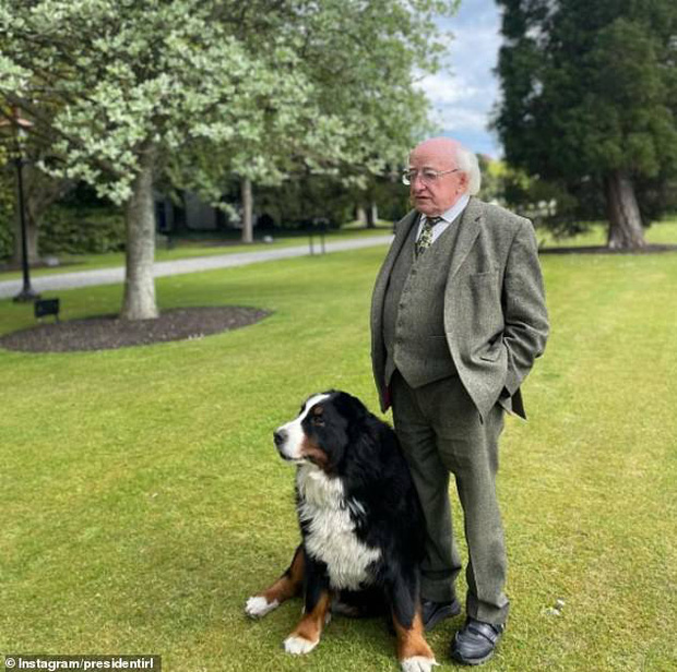 Chó cưng của Tổng thống Ireland càn quét MXH vì màn phá rối chủ đáng yêu hết sức ngay trên sóng trực tiếp - Ảnh 5.
