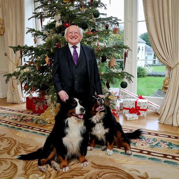 Chó cưng của Tổng thống Ireland càn quét MXH vì màn phá rối chủ đáng yêu hết sức ngay trên sóng trực tiếp - Ảnh 6.