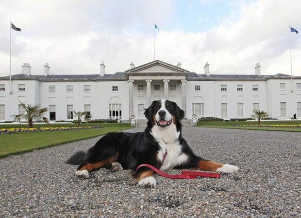 Chó cưng của Tổng thống Ireland càn quét MXH vì màn phá rối chủ đáng yêu hết sức ngay trên sóng trực tiếp - Ảnh 9.