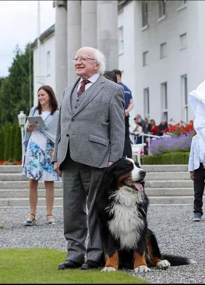 Chó cưng của Tổng thống Ireland càn quét MXH vì màn phá rối chủ đáng yêu hết sức ngay trên sóng trực tiếp - Ảnh 11.