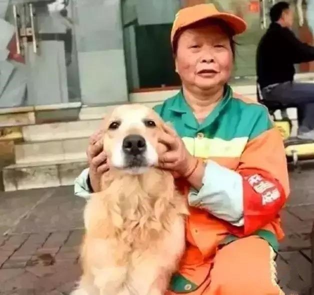 Được người lao công cưu mang lúc bị thương, chú chó hàng ngày chăm chỉ báo ơn khiến bao người thích thú - Ảnh 2.