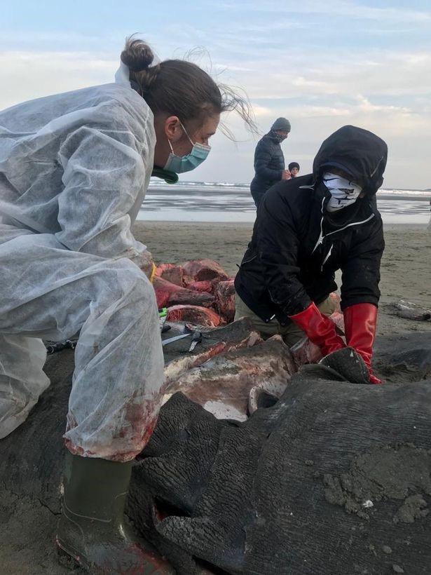 Xác của con cá mập dài hơn 7 mét trên bờ biển làm dấy lên nhiều nghi vấn - Ảnh 4.