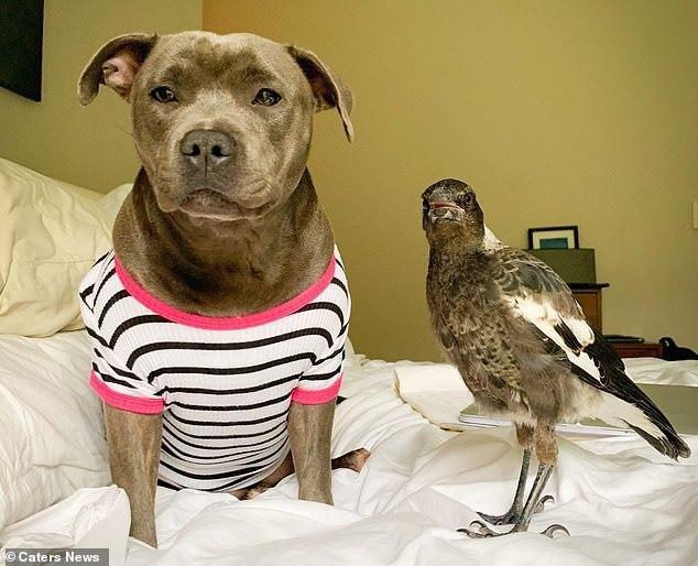 Chó kết thân với chim ác là và cái kết khiến ai cũng cảm động - Ảnh 4.
