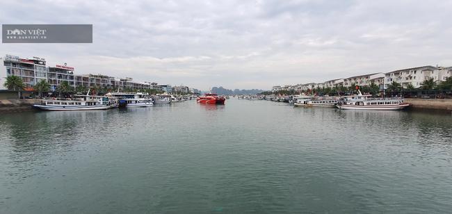 Đóng cửa vịnh Hạ Long: Những con tàu triệu đô tiếp tục mắc cạn - Ảnh 5.