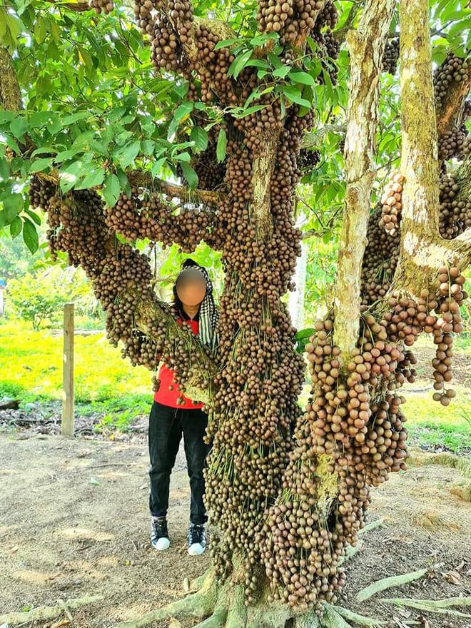 Cô gái khoe loại quả mọc kín mít từ gốc lên thân cây khiến dân mạng ngỡ ngàng, ngơ ngác rồi… bật ngửa vì sợ! - Ảnh 2.
