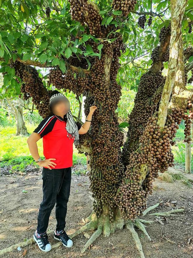 Cô gái khoe loại quả mọc kín mít từ gốc lên thân cây khiến dân mạng ngỡ ngàng, ngơ ngác rồi… bật ngửa vì sợ! - Ảnh 3.