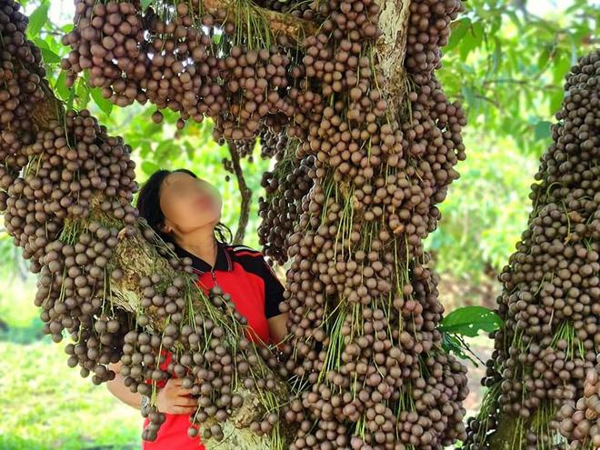 Cô gái khoe loại quả mọc kín mít từ gốc lên thân cây khiến dân mạng ngỡ ngàng, ngơ ngác rồi… bật ngửa vì sợ! - Ảnh 4.