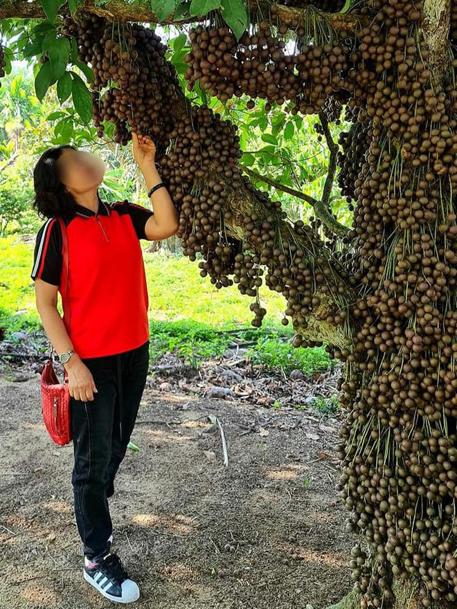 Cô gái khoe loại quả mọc kín mít từ gốc lên thân cây khiến dân mạng ngỡ ngàng, ngơ ngác rồi… bật ngửa vì sợ! - Ảnh 5.