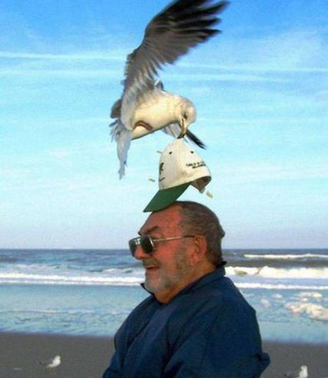 Giật mình khi vô tình bắt gặp hình ảnh oái oăm trên bãi biển - Ảnh 6.