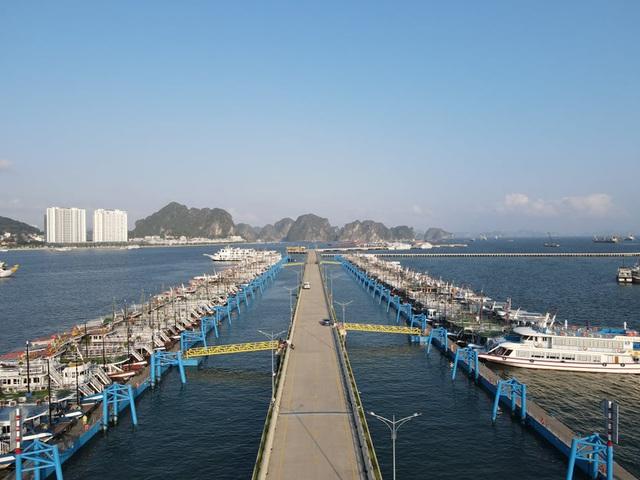 Dàn tàu du lịch hơn 500 chiếc trị giá hàng nghìn tỷ tại Hạ Long đắp chiếu, doanh nghiệp cầu cứu Thủ tướng - Ảnh 6.