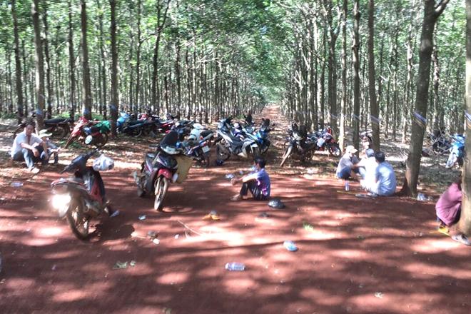 Hàng chục đối tượng tổ chức đá gà ăn tiền trong rừng cao su giữa mùa dịch - Ảnh 5.