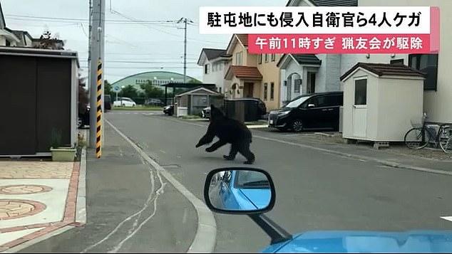 Video: Gấu nâu đại náo thành phố Nhật Bản, tấn công doanh trại quân đội - Ảnh 2.