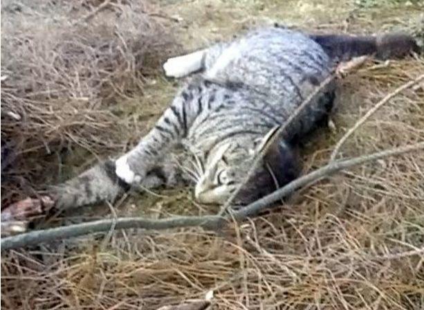 Cất công đặt bẫy để săn gà rừng, vừa nhìn thấy con mồi bị trúng bẫy, người thợ săn xót xa không kìm được nước mắt - Ảnh 2.