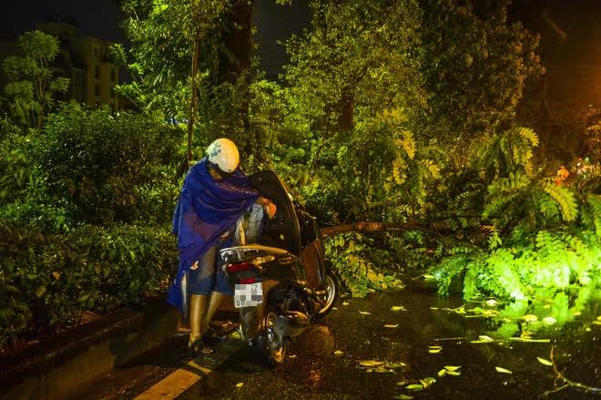 [ẢNH] Sau mưa giông lớn ở Hà Nội, cây đổ la liệt, đường ngập, nhiều xe chết máy - Ảnh 1.