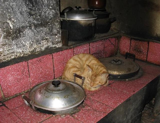 Đem chú mèo hoang về nuôi, 5 năm sau, cả gia đình thoát được một kiếp nạn  - Ảnh 4.