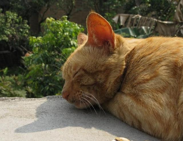 Đem chú mèo hoang về nuôi, 5 năm sau, cả gia đình thoát được một kiếp nạn  - Ảnh 2.