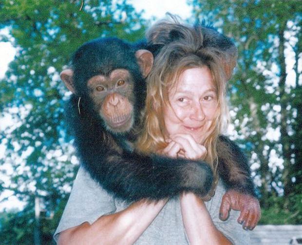 Chuyện về khỉ Travis: Sống như người suốt 14 năm bỗng 1 ngày điên cuồng cắn xé người thân, trước khi chết vẫn cố lê bước về giường của mình - Ảnh 4.