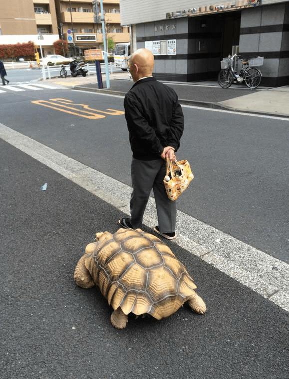 Ông lão người Nhật nuôi con rùa nặng 70kg, quãng đường 5 phút đi mất 3 tiếng: Sống chậm lại, cuộc đời quả thực đáng yêu hơn bạn nghĩ - Ảnh 12.
