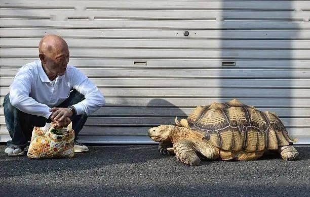Ông lão người Nhật nuôi con rùa nặng 70kg, quãng đường 5 phút đi mất 3 tiếng: Sống chậm lại, cuộc đời quả thực đáng yêu hơn bạn nghĩ - Ảnh 14.