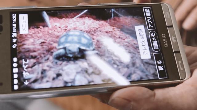 Ông lão người Nhật nuôi con rùa nặng 70kg, quãng đường 5 phút đi mất 3 tiếng: Sống chậm lại, cuộc đời quả thực đáng yêu hơn bạn nghĩ - Ảnh 6.