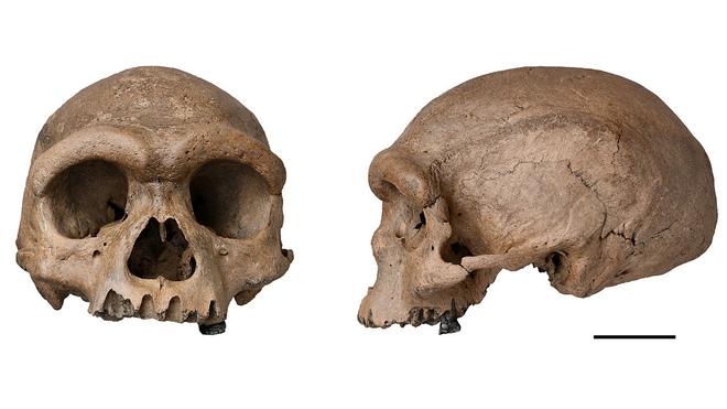 Hộp sọ Người rồng được phát hiện ở Trung Quốc có thể là một loài linh trưởng mới, có họ hàng gần với chúng ta hơn cả người Neanderthals - Ảnh 1.