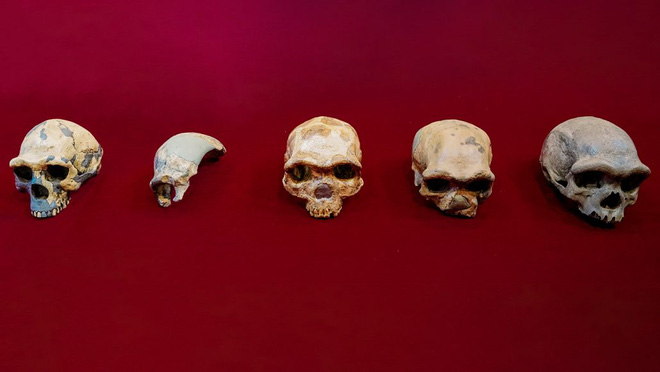 Hộp sọ Người rồng được phát hiện ở Trung Quốc có thể là một loài linh trưởng mới, có họ hàng gần với chúng ta hơn cả người Neanderthals - Ảnh 2.