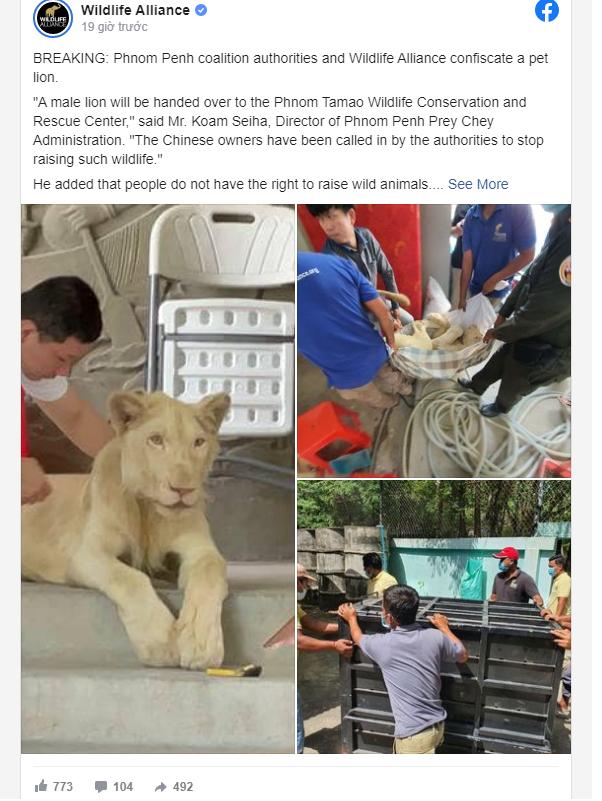 Phát hiện sư tử bị nuôi trái phép, đến nơi các nhân viên sững sờ trước điểm bất thường của nó - Ảnh 4.