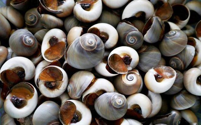 Thanh niên đi biển phát hiện có sinh vật khổng lồ dưới lớp cát, bắt lên mới biết hoá ra là loại ốc rất quen thuộc ở Việt Nam - Ảnh 6.