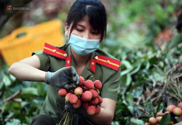 Ảnh: Công an huyện Lục Ngạn, Bắc Giang chung tay thu hoạch vải cùng bà con ngay từ đầu vụ - Ảnh 9.
