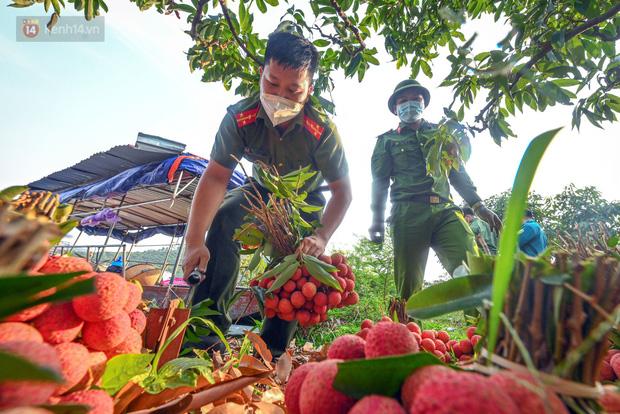 Ảnh: Công an huyện Lục Ngạn, Bắc Giang chung tay thu hoạch vải cùng bà con ngay từ đầu vụ - Ảnh 10.