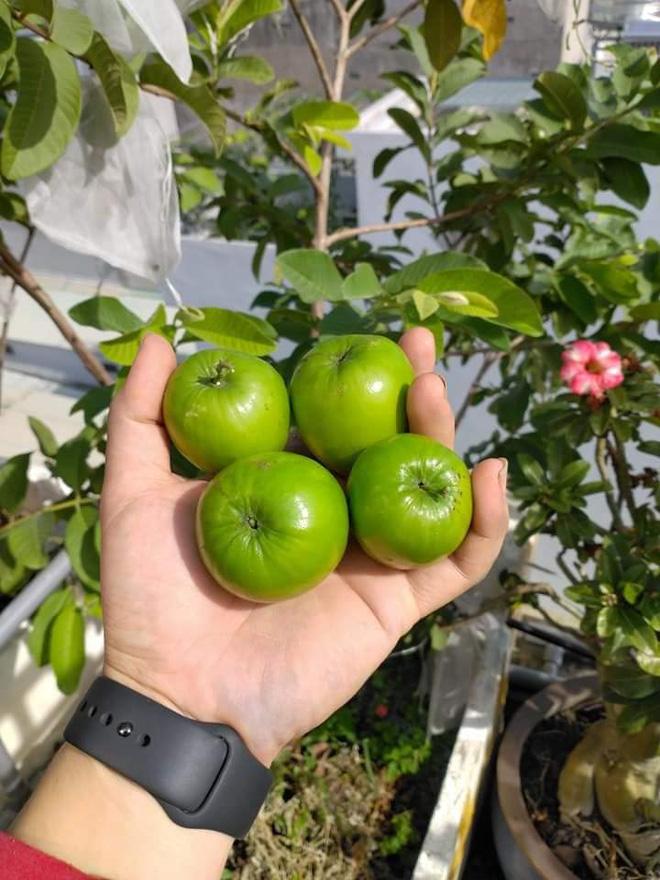Sân thượng bé tẹo nhưng cô nàng vẫn biến được thành vườn cây trái có cả ổi, đu đủ, hồng xiêm, xoài..., ai nhìn cũng mê mẩn - ảnh 3