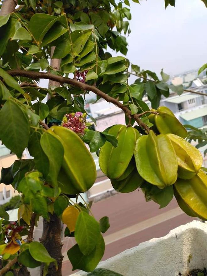 Sân thượng bé tẹo nhưng cô nàng vẫn biến được thành vườn cây trái có cả ổi, đu đủ, hồng xiêm, xoài..., ai nhìn cũng mê mẩn - ảnh 4