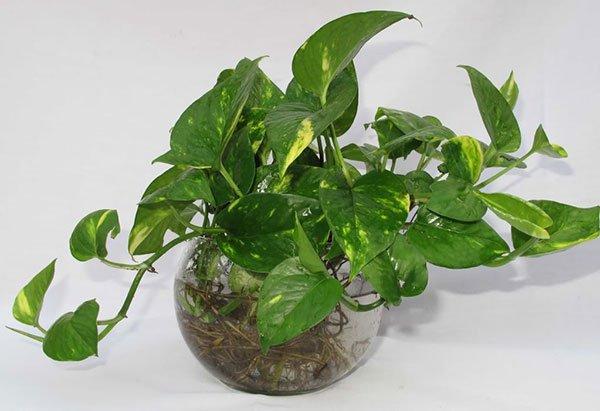 7 loại cây cảnh phổ biến nhưng có độc, nên cân nhắc kỹ trước khi trồng - Ảnh 5.