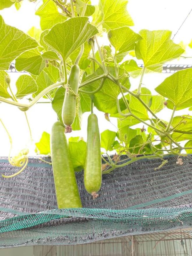 Sân thượng bé tẹo nhưng cô nàng vẫn biến được thành vườn cây trái có cả ổi, đu đủ, hồng xiêm, xoài..., ai nhìn cũng mê mẩn - ảnh 9