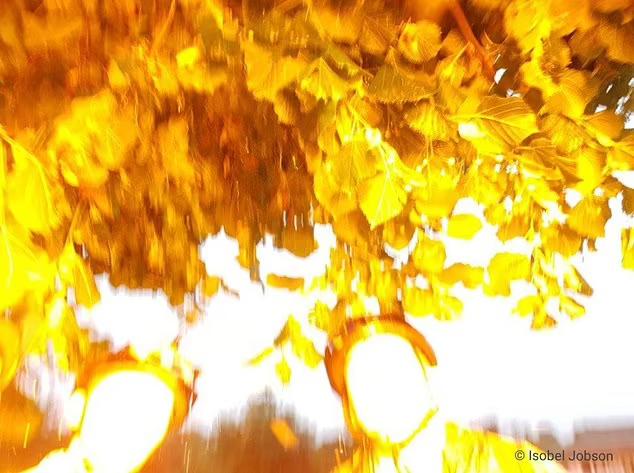Selfie dưới gốc cây khi trời mưa, 3 chị em suýt chết, lý do nằm ngay ở cánh tay của 1 trong 3 người - Ảnh 3.