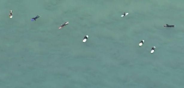 Clip: Thót tim đàn cá mập bơi xung quanh người lướt sóng rình mồi mà không ai hay biết - Ảnh 2.