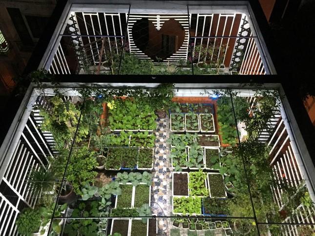 Cách thiết kế vườn rau sân thượng mùa dịch vừa đơn giản lại đẹp mắt - Ảnh 5.