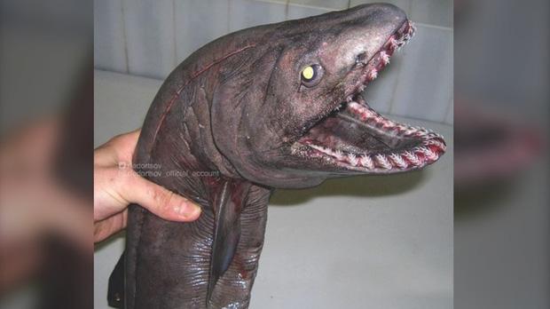Anh ngư dân có duyên với cá quái vật, câu được nhiều tới nỗi phải lập Instagram để lan tỏa chiến công với mọi người - Ảnh 7.